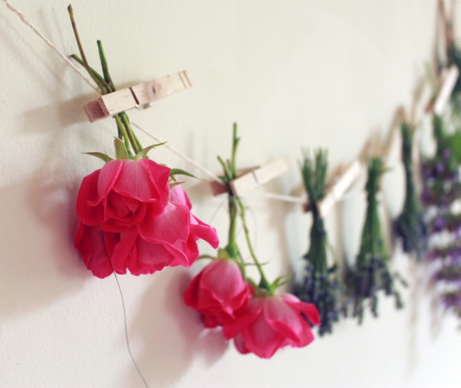 Drying Tea Roses