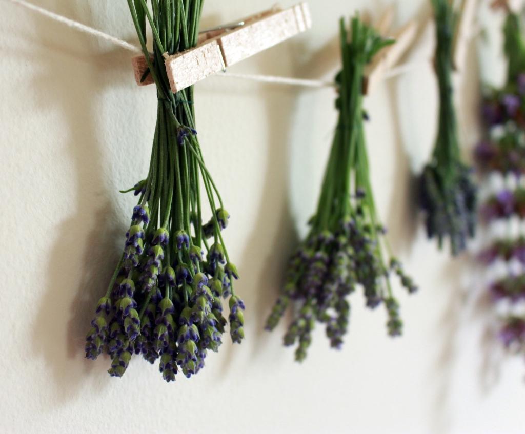 Lavender Drying