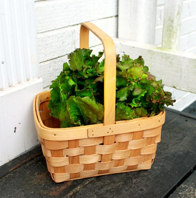 Using Lettuce in Rituals