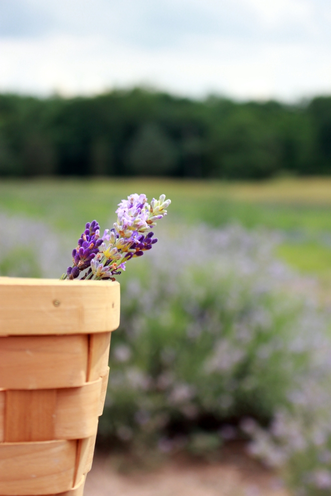 Litha Lavender