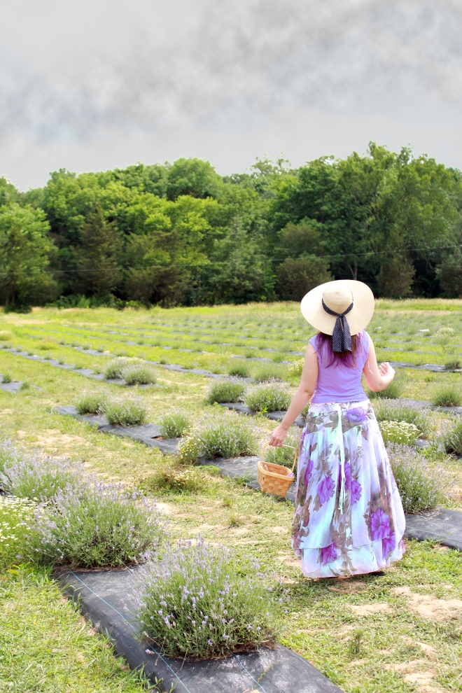 Litha at the Lavender Fields