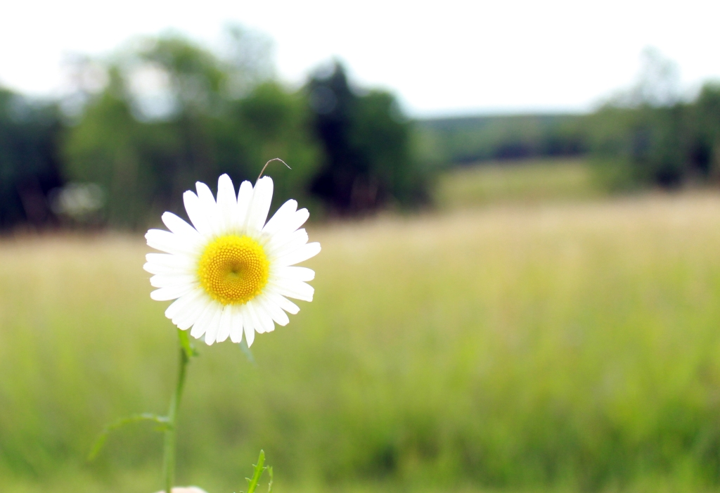 Love Spells with Daisies