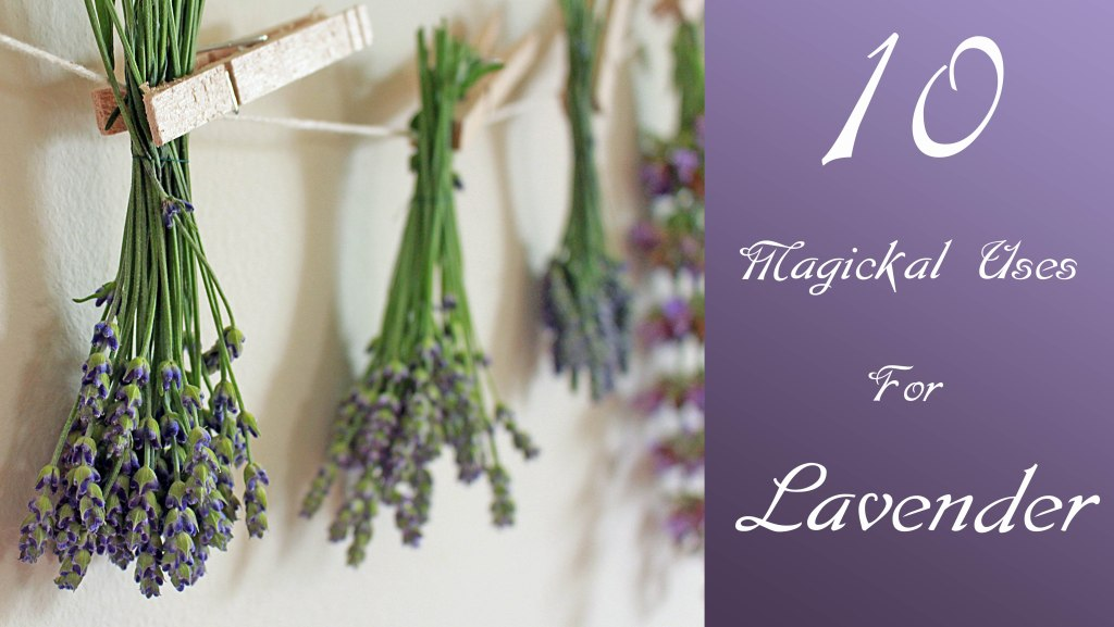 10 Magical Uses for Lavender
