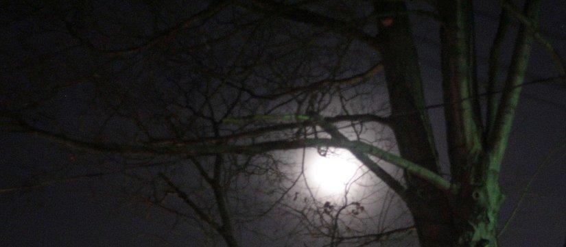 Wolf Moon Ritual